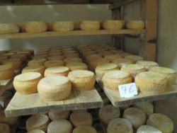 Corse fromage Paul Marie Nicolosi (17)