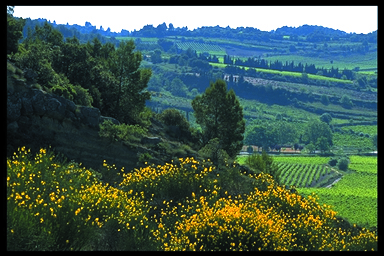 Minervois 038 Félines Photo G. Deschamps